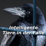 Intelligente Tiere in der Falle!
