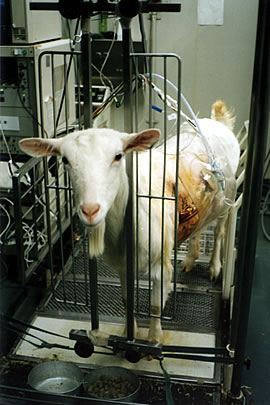 Tierversuche Gesetz
