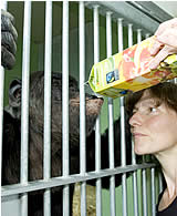 David Diaz, Great Ape Project Spanien besucht Hiasl