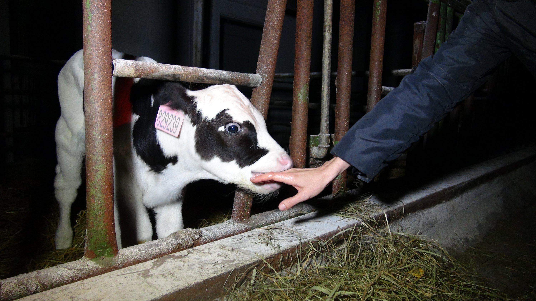 195 Welttag Muttermilch-Spende - Stillwissen