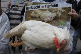 Tote Hühner vor Landwirtschaftskammer: keine Mastfabrik von