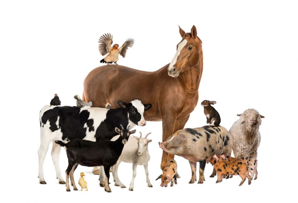 Zoo Animals Together Clipart Höhere Strafen f&...