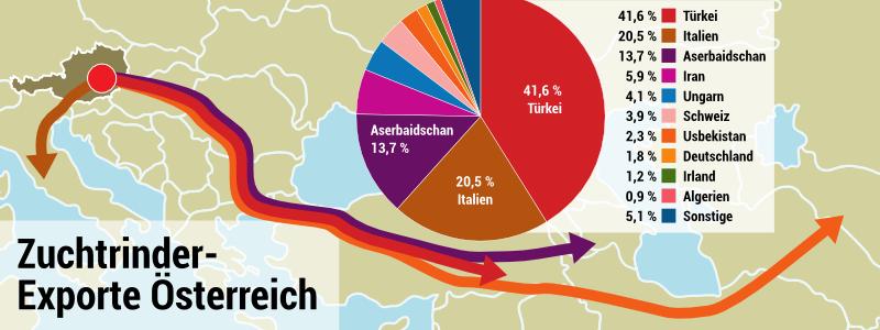 Österreichische Rinder werden weit über die EU-Grenzen hinaus transportiert!